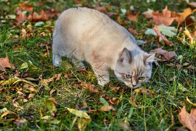 На прогулке кошки животные