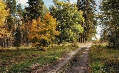 Листает осень разноцветный календарь...
