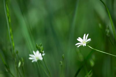 Летняя лёгкость трава цветы лето