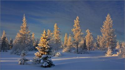 Инея стеклярусом вышит зимний день, в свете бликов солнечных нынче даже тень...(2) зимний день ЯНАО Новый Уренгой