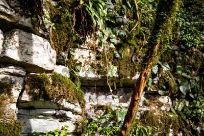 Стены и зелень Тисо-самшитовая роща каньон Сочи горы