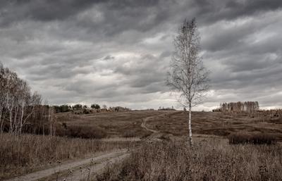 """""""Одинокая"""". Осень небо дорога одинокая берёзка"""
