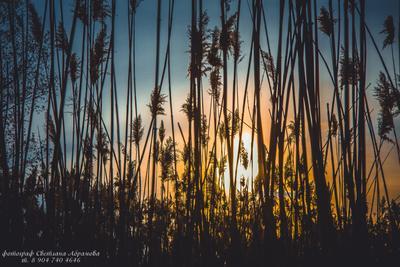 *** вечер закат красота