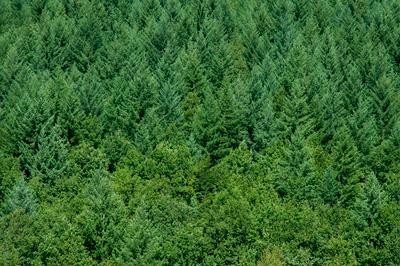 Румынский лес лес