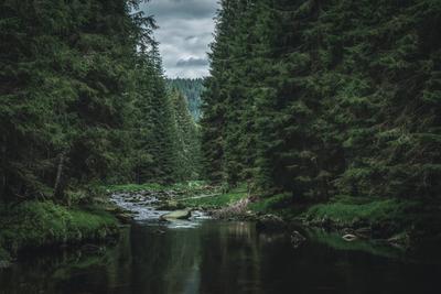 Лесной ручей лес деревья ручей ели вода тишина спокойствие горы