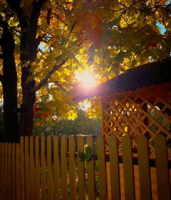 Осенняя безмятежность