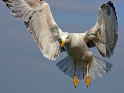 ...Я к Вам за рыбкой ...*** море рыба чайки охота