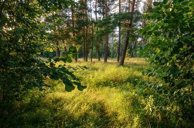 Поляна... Лето лес поляна