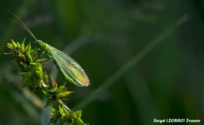 Насекомое TangodeZorros насекомое природа