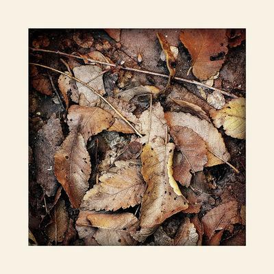листья листья