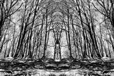 Тотем деревья, отражение