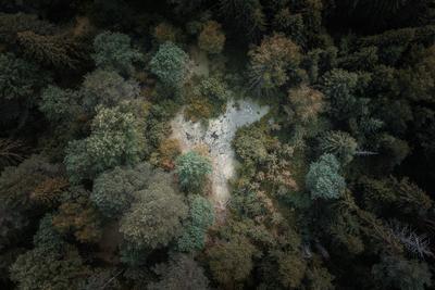 *** лес озеро природа деревья осень