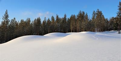 снежные барханы прмрода барханы снег лес
