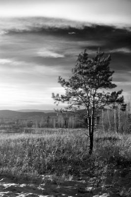alone Дерево