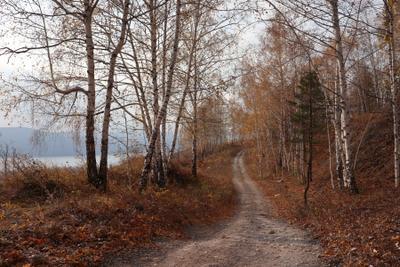 Осенняя дорога. осень