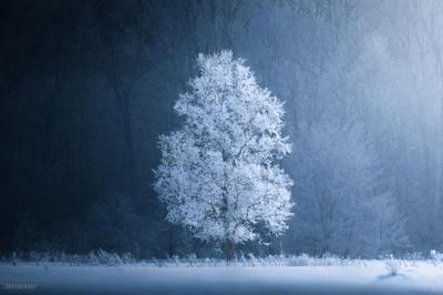 Равновесие Дерево иней зима мороз