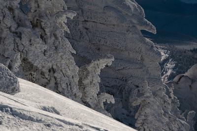 Pro царство Снежной королевы Царство Снежная королева скалы кедры снег иней зима Сибирь Горная Шория Шерегеш
