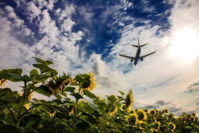 Полёт небо самолет подсолнух