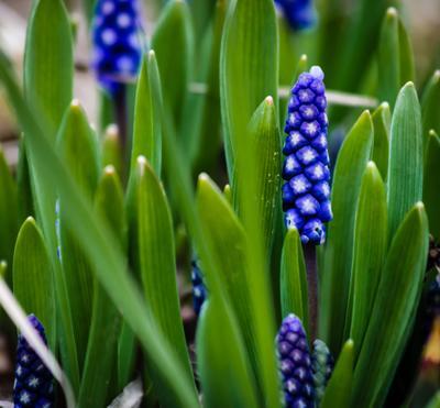 *** флора цветы растения