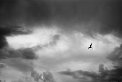гори и лети