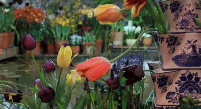 На выставке цветов... цветы тюльпан