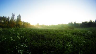 *** природа туман лес