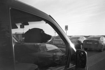 *** самара город машины пёс собака вечер закат знак отражение ракурс свет тень кодак 35мм пленка фотонапленку снятонапленку монохром чб чёрный белый фото снимки кадры