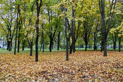 Осенний парк осень парк