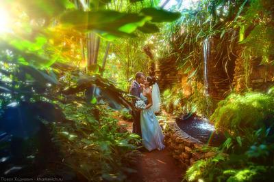 Солнце свадьба, ботанический сад, солнце, магия