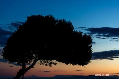 Говорят, у каждого фотографа есть свое дерево... дерево закат лето небо синий