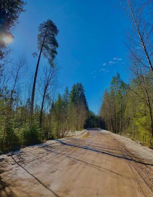 Дорога Лес природа