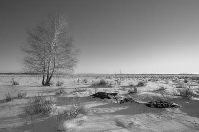 День зимы