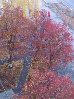 Осенняя акварель ....последние мазки..