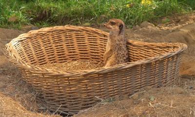 Плетёный домик Суслик