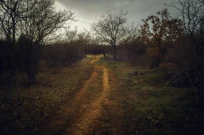 *** Лес дорога пейзаж