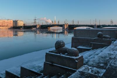 Рассматривая отражение шпиля Санкт-Петербург вечер лёд река отражение львы мост зима