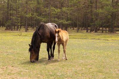 С мамой не страшно Лошади лес жеребенок поле