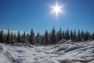 ***Моя Сибирь пейзаж Сибирь солнце зима лес снег