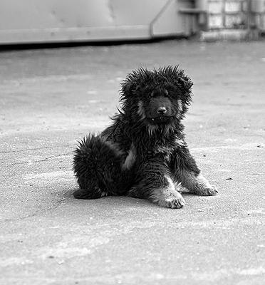 про собачью жизнь N5 бездомный щенок