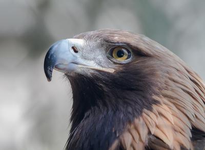 Зоркий глаз Птица орел