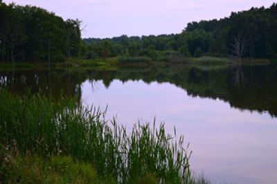 Вечер.Озеро.Камыш. озеро камыши тишина июль
