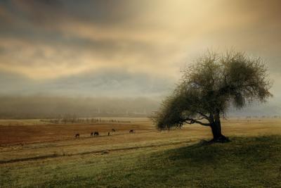 Осенний пейзаж пейзаж дерево пастбище лошади осень