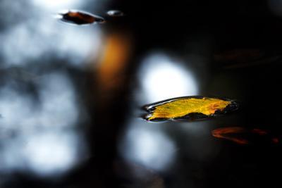 осень природа растения макро
