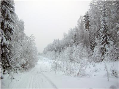 Зимний день Карелия зима лес лыжня