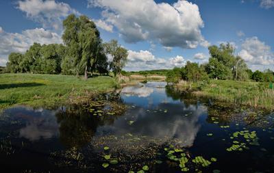 Май Украина, Чернигов, Природа, Полесье