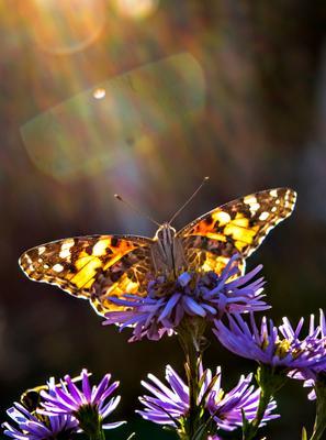 Октябринки бабочка цветок свет