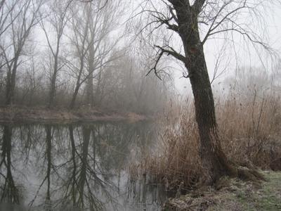 ***туман пейзаж