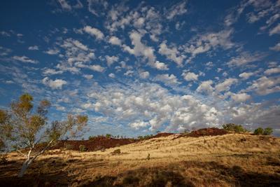Облака, эвкалипт и немного остепнённого шоколада облака эвкалипт скалы степь
