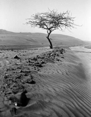 *** desert UAE