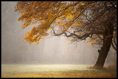 Туманное осеннее утро туман утро дерево осень